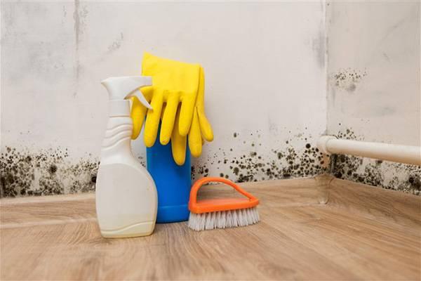 Как избавиться от плесени и грибка в доме