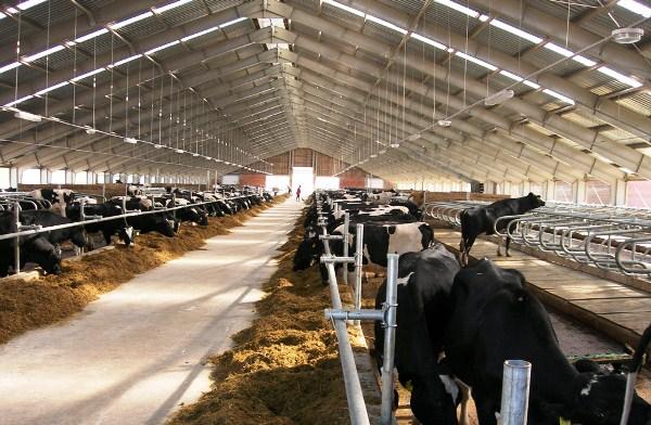 Агропромышленный и животноводческий комплекс