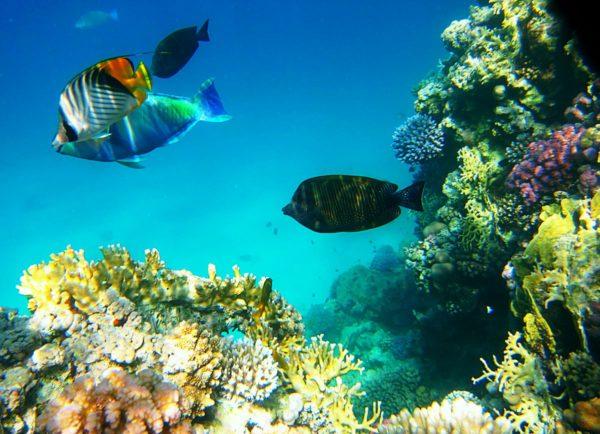 В Красном море чистая и прозрачная вода, благодаря этому, в нем живут уникальные и редкие виды морских