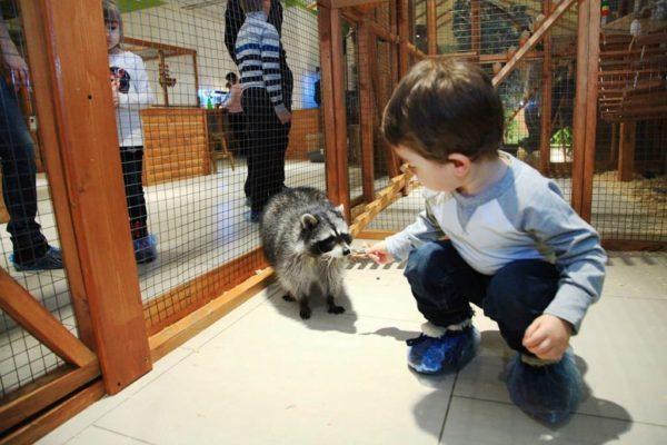 bolshoj_moskovskij_zoopark_12-600x400-5369432
