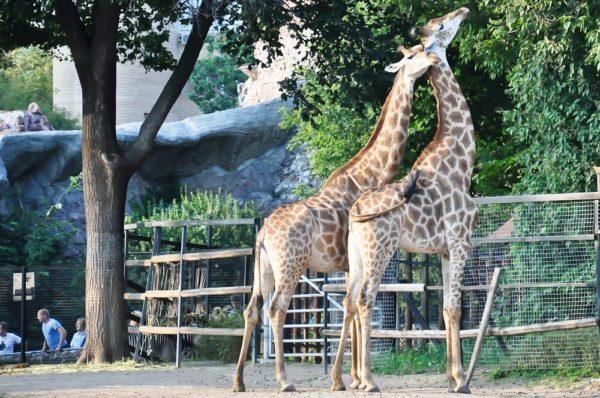 bolshoj_moskovskij_zoopark_13-600x398-6392463