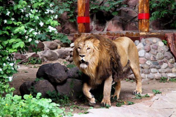 bolshoj_moskovskij_zoopark_15-600x400-1093874