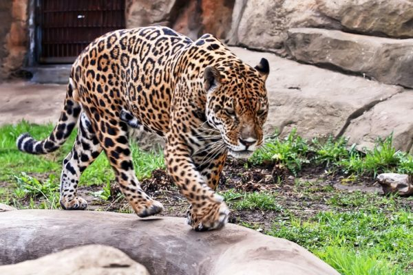bolshoj_moskovskij_zoopark_17-600x400-5658436