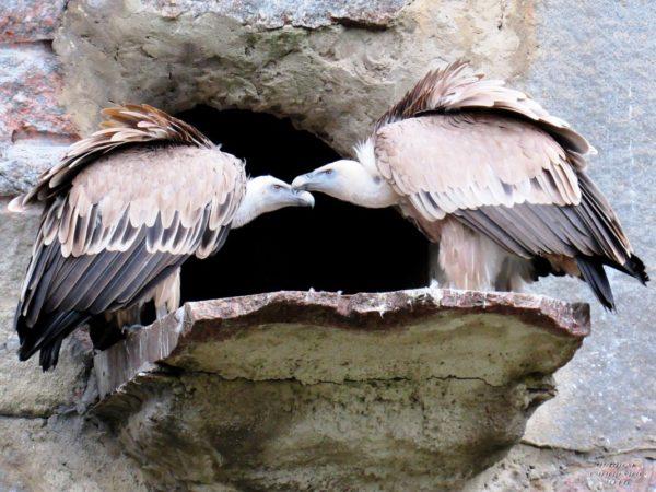Скала хищных птиц