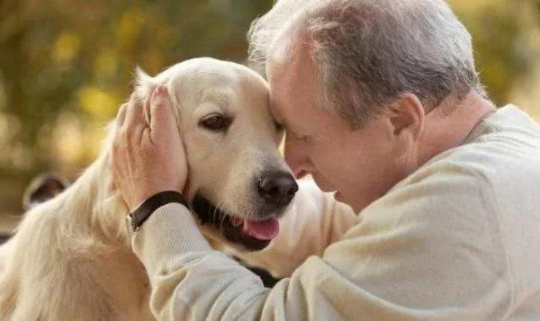 Когда собака стала старой