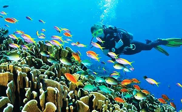 Атолл известен роскошными пляжами, отличным обслуживанием и идеальными условиями для дайвинга