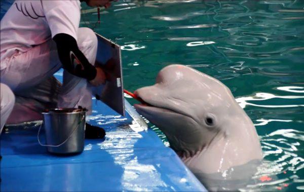 Дельфинарий в Оренбурге