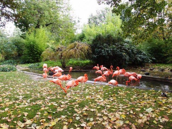 Ботанический сад в Париже