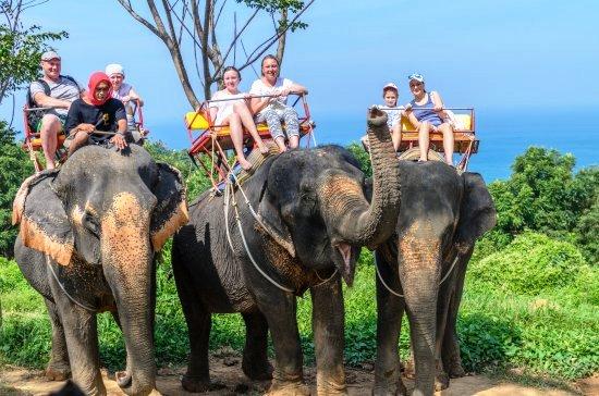Трекинг на слонах