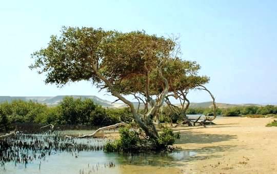 Национальный парк Набк