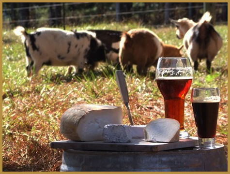 pairing-lager-and-cheese
