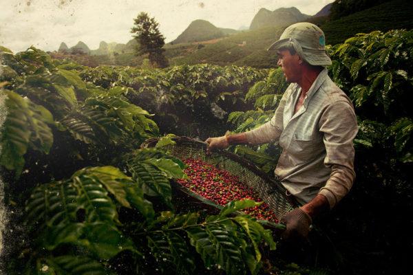 proizvodstvo_kofe_v_nikaragua_2